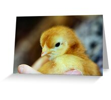 A chick in the hand Greeting Card