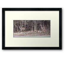 Out of the Brush Framed Print