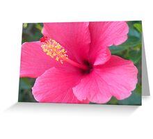 Hot Pink Hibiscus  Greeting Card