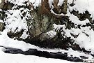 Stream Bank in Winter by Stephen Beattie