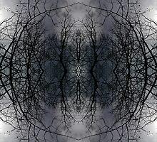 Winter Symmetry  by Kelly Carmody