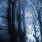 Watcher In The Woods by Sally Green