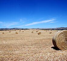 Hay Barrels by JoshuaTho