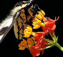 Pollination by bvphotography