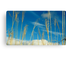 Wheat In The Sky Canvas Print