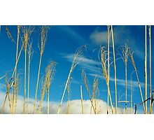 Wheat In The Sky Photographic Print