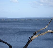 Squally wind over Eggs and Bacon Bay by Goggo