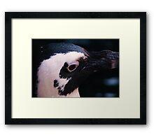 Remy, the Penquin Framed Print