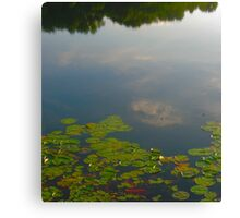 Green Lilly Pads with Reflection on Pond Canvas Print