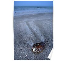 Beached Pen Shell Poster