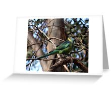 Mallee Ringneck Greeting Card