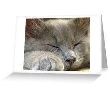 Cosmo sleeping Greeting Card