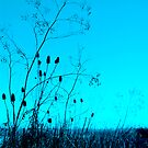 Cattails at Dusk by Zolton