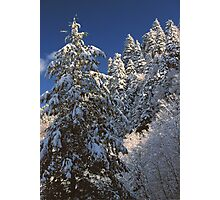 WINTER TREES,GREAT SMOKY MOUNTAINS NP Photographic Print