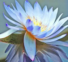 Spinning Chakra Lotus by Clare McClelland