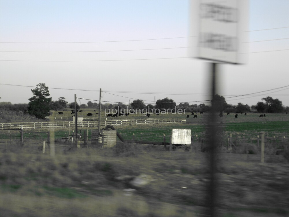 Cows from the Car by polylongboarder