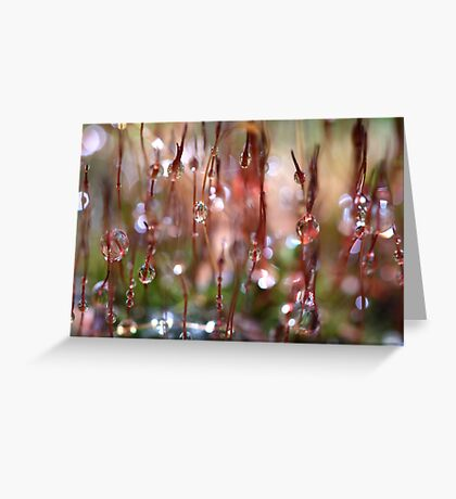 Rain Catcher Greeting Card