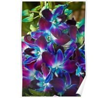 Beautiful coloured Orchids Poster