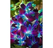 Beautiful coloured Orchids Photographic Print