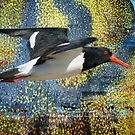oystercatcher's river by GrowingWild
