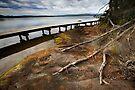 Merimbula Boardwalk by Darren Stones
