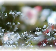 Baby's Breath... by Rikki