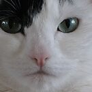 Oliver the wonder Cat by ubumebme