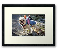 Smiling Bulldog Framed Print