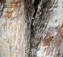 paperbark by peteroxcliffe