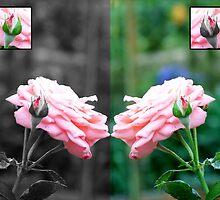 Pink flowers by Joeltee