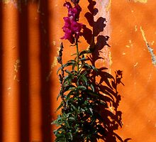 Urban Wild Flowers and Peeling Paint by MHen