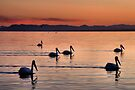 Pelicans Sunset Salton Sea by Jo Nijenhuis