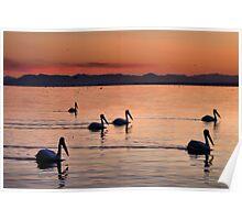 Pelicans Sunset Salton Sea Poster