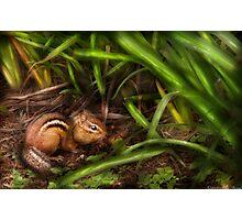 A cute little chipmunk  Photographic Print