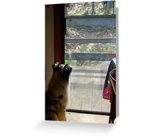 Doggie TV Greeting Card
