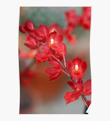 Red Orchids Poster