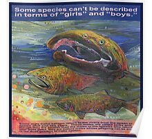 Save the salmon, all three genders (Coho salmon) Poster