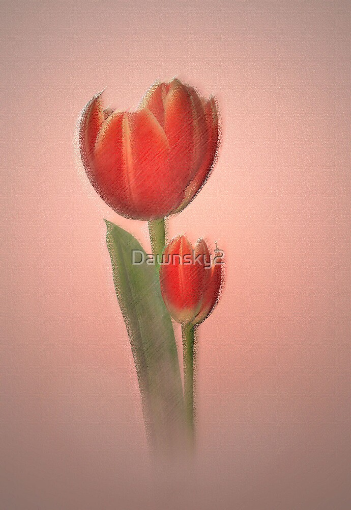Tulips in light by Dawnsky2