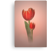 Tulips in light Canvas Print
