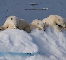 Resting Bears by Steve Bulford