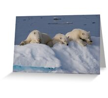Resting Bears Greeting Card
