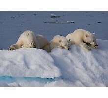 Resting Bears Photographic Print