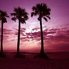 Three Palms by sailorsedge