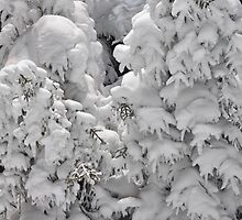 winter by Alexandr Grichenko