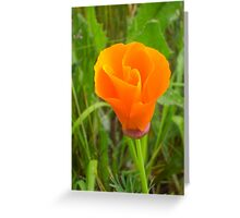 It's Orange Poppy Season #3 Greeting Card