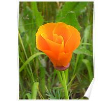 It's Orange Poppy Season #3 Poster