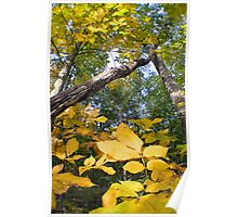 fall colors yellow and green Poster