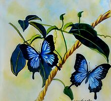 Dancing Butterflies colour pencils and pens by Sandra  Sengstock-Miller