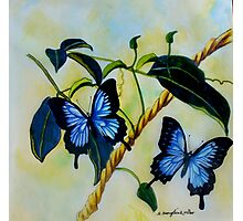 Dancing Butterflies colour pencils and pens Photographic Print