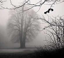 Melancholy Tree by Kofoed